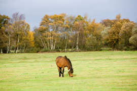 new forest holiday accommodation - one of the new forest parks nearby